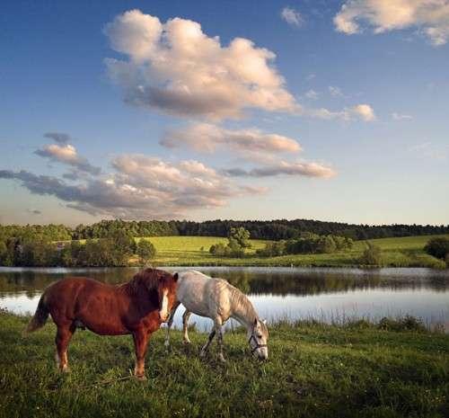 اروع واجمل الخيول في صور horses1.jpg