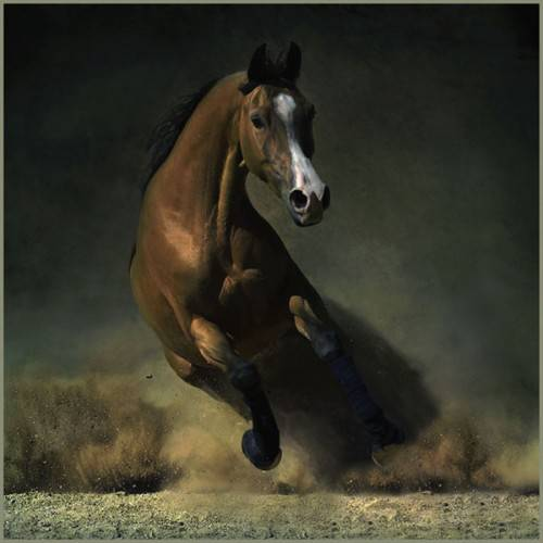 اروع واجمل الخيول في صور horsesu.jpg