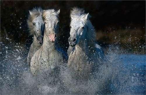 كل واحد يحط صورة حيوانه المفضل horses14.jpg