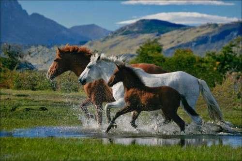 اروع واجمل الخيول في صور . خيول عربية horses4.jpg